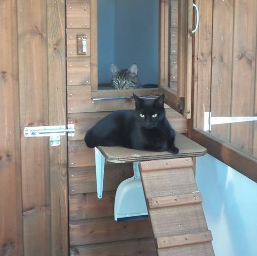 Black and Tabby Cats at Hickstead Lodge Cattery