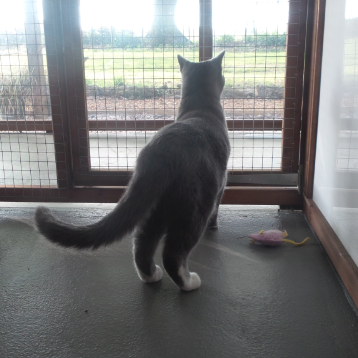Bright View at Hickstead Lodge Cattery