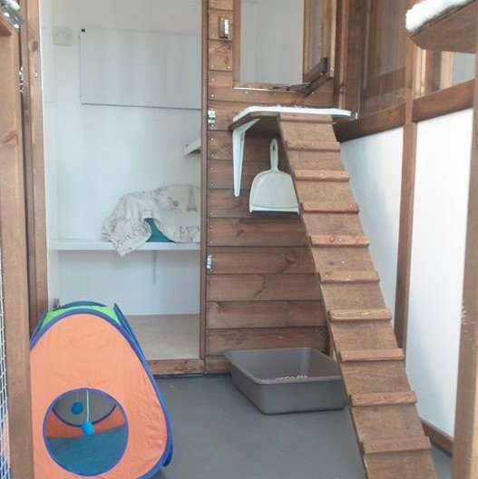 CIEH approved cat pen at Hickstead Lodge Cattery