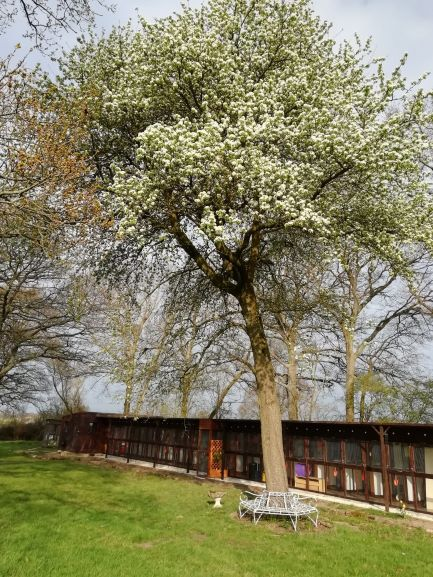 Cat Chalets at Hickstead Lodge Cattery