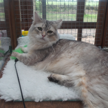 Relaxing at Hickstead Lodge Cattery